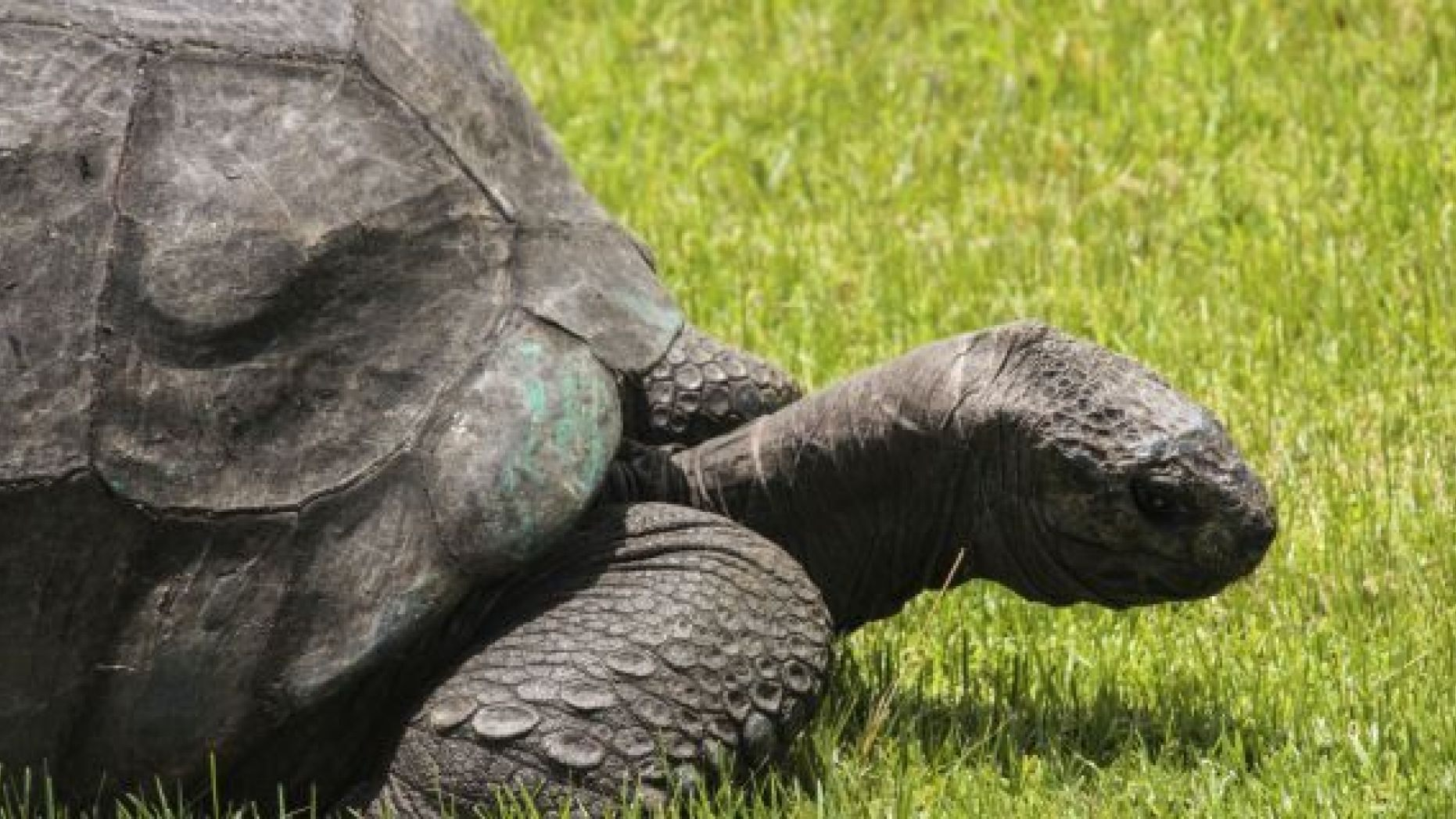 https://www.foxnews.com/science/the-fascinating-sex-life-of-jonathan-the-185-year-old-giant-tortoise